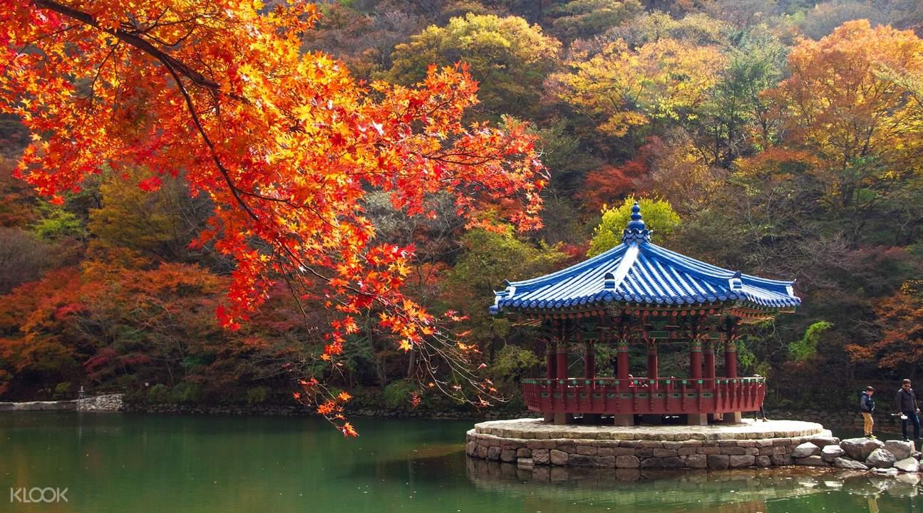 naejangsan national park day tour in autumn